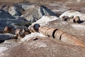 Versteinerte Bäume, Petrified Forest Nationalpark, Arizona